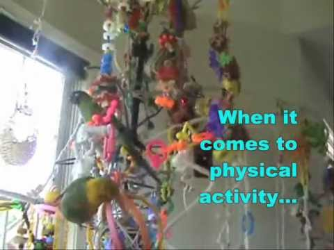Fun Parrot Play Gyms And Tree Stand Perches Getting
