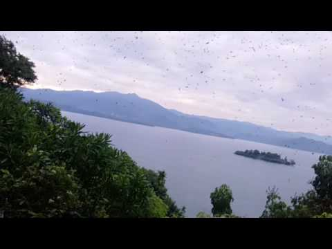 BIRD WATCHING IN LAKE KIVU RUBAVU DISTRICT BY GOLDEN RWANDA TOURS AND TRAVEL