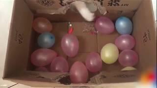 Подборка: Коты и воздушные шарики