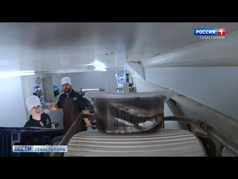 В магазинах Севастополя появится свежая черноморская рыба в вакууме