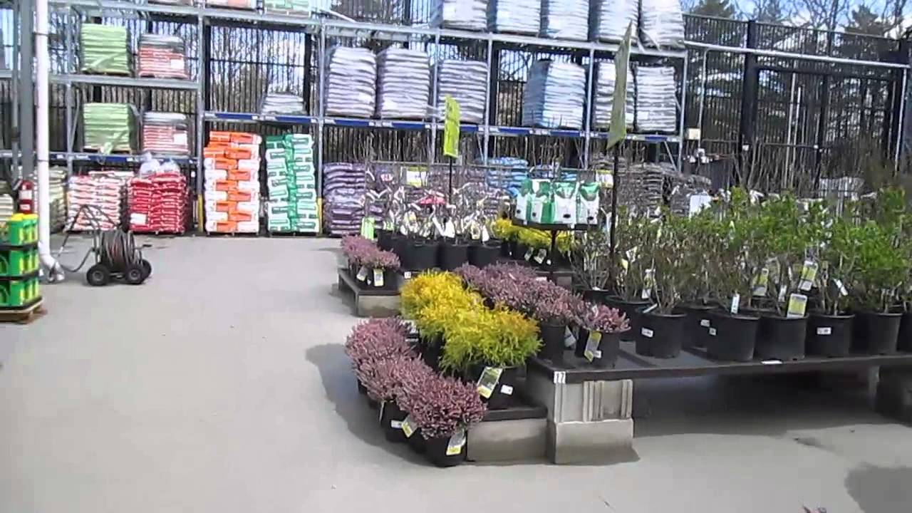 Charming Plants At Loweu0027s   YouTube