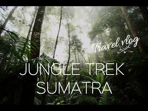 TRAVEL VLOG - Jungle trek, à Sumatra