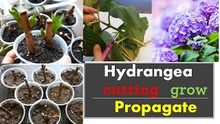 How to propagate hydrąngeas from cuttings:: Grow::