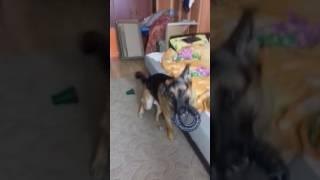 Когда мы дома одни с собакой