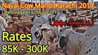 85K - 300K Rates   Naval Cow Mandi Karachi   Cow Mandi 2019   22nd July Updates thumbnail