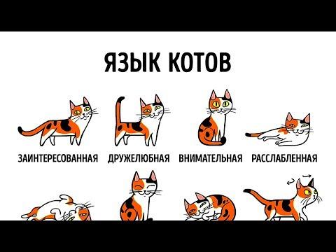 Как узнать настроение кошки