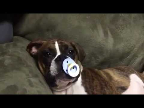 Hund Wird Gehäutet Youtube
