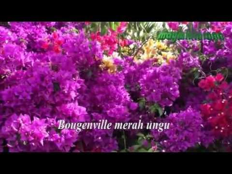 BOUGENVILLE, Broery Marantika, editor:maymintaraga