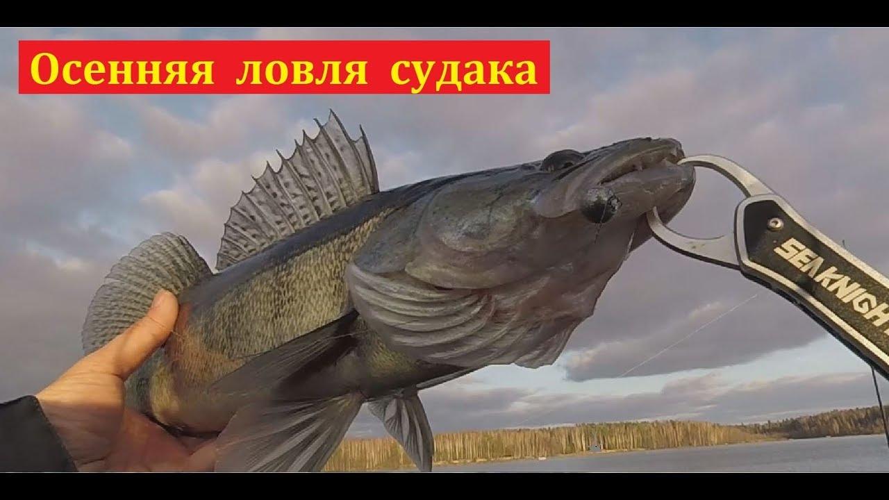 судак ловля осенью на водохранилище