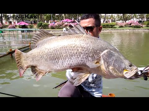 FishingKaki.com - Trip To Pasir Ris Pond