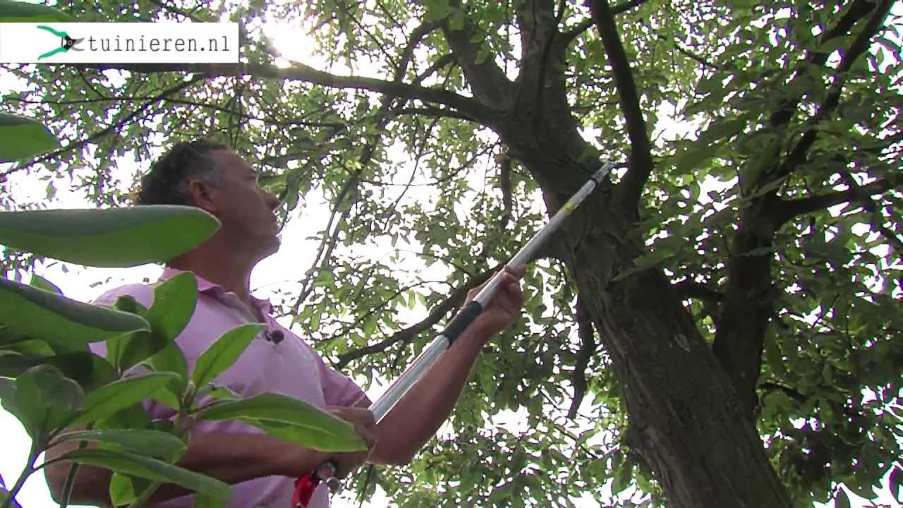 Boom snoeien hoe snoei je bomen youtube - Hoe een boom te verlichten ...