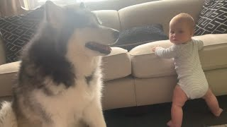 Mia Learns To Stand And Unexpected Visitors (So Cute!!)