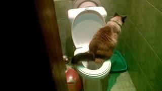 кот ходит в туалет