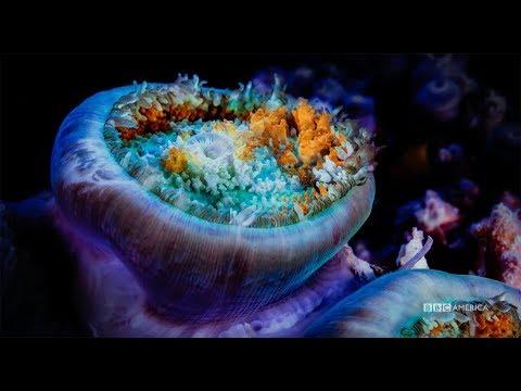 Planet Earth: Blue Planet II   Premieres Saturday, January 20 @ 9/8c on BBC America