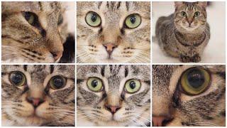 NyankuruTV Vol.34  にゃんくるTV Vol.34 【かわいい猫カフェ/保護猫】【Cute Cat Cafe】