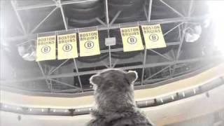 Bruins Hockey Rules - Opening Night