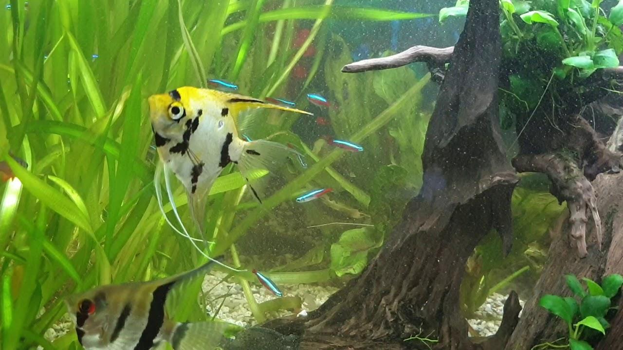 Die Aquarium