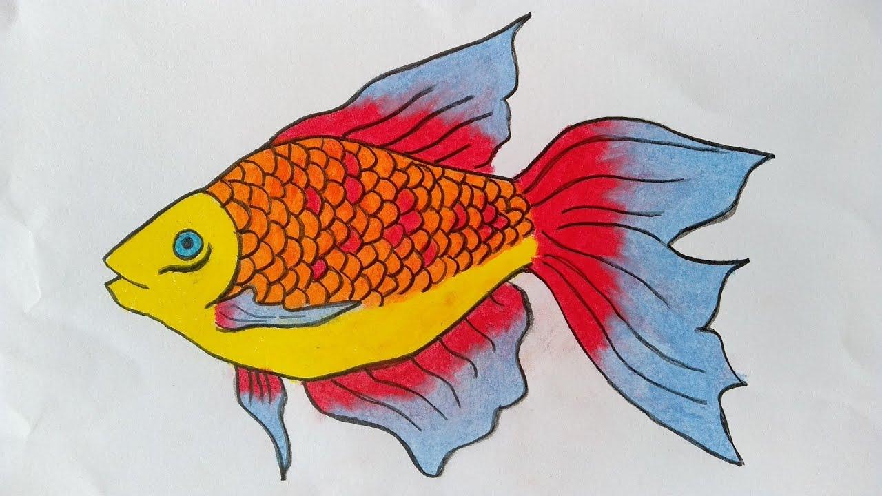 Mewarnai dan Menggambar: Cara Mewarnai Ikan Cupang