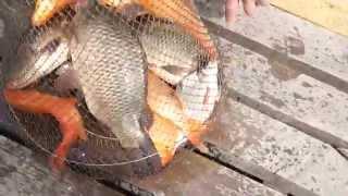 Риболовля на Калинівці рекомендую !