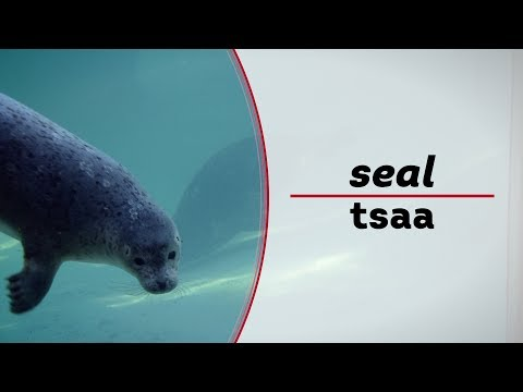 Learn to Speak Tlingit | How to say seal