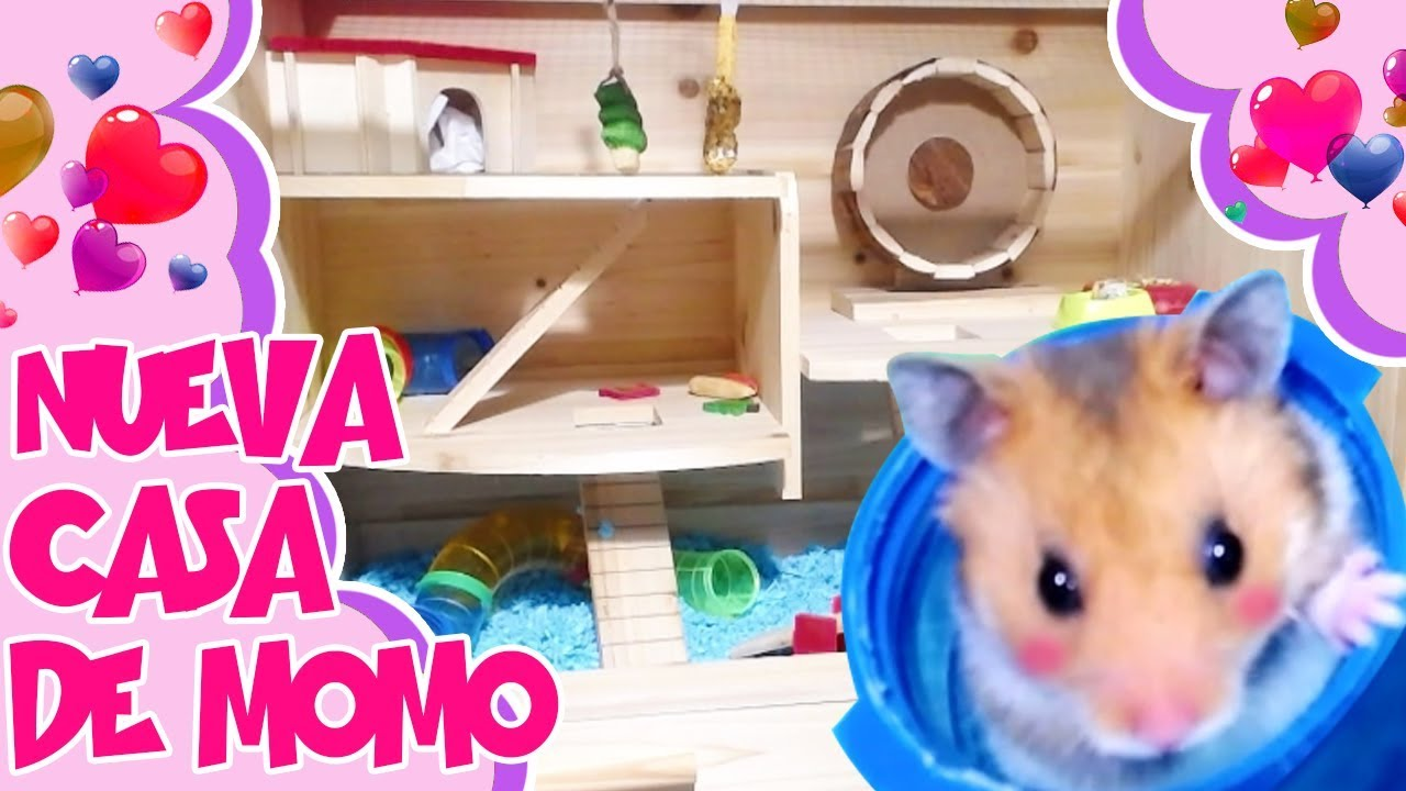 La nueva casa de mi hamster momo new hamster cage youtube - La casa de mi tresillo ...