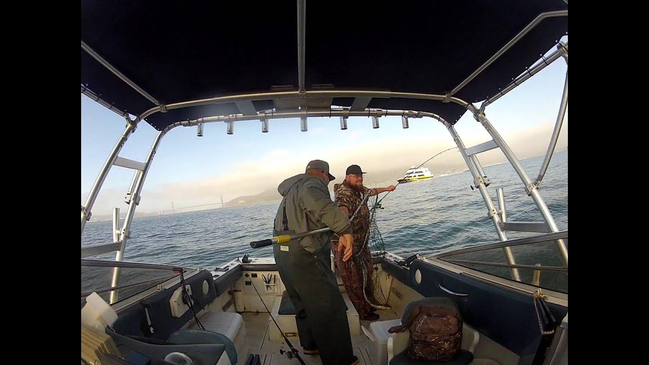 Sf bay halibut fishing live anchovies big halibut caught for Sf bay halibut fishing
