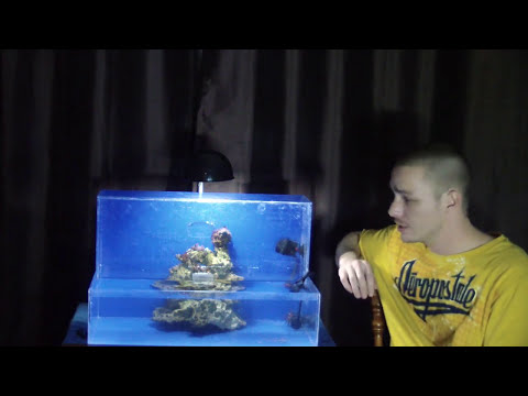 HOW TO: Upside Down Aquarium - Saltwater!