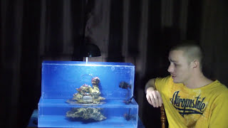 How To: Upside Down Aquarium - Saltwater!