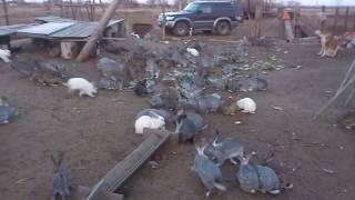100 жирных кроликов 2 (напугали😂)