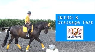 Intro B Dressage Test Learning Tool