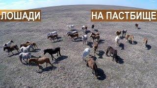 Разведение лошадей на мясо в КФХ Возмищевой В.И.