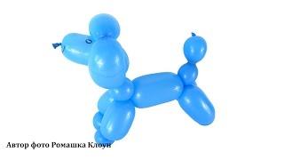 СОБАЧКА-ПУДЕЛЬ ИЗ ДЛИННОГО ШАРИКА ШДМ своими руками How to Make a Balloon Poodle