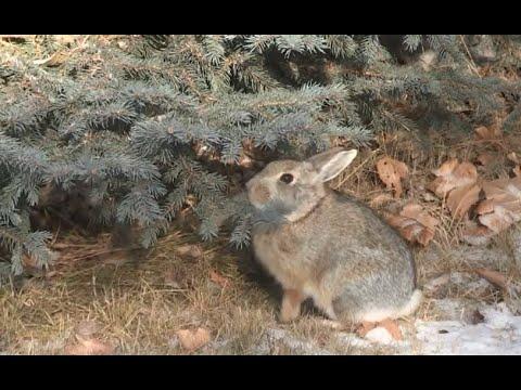How Bunny Rabbits Stay Warm Youtube