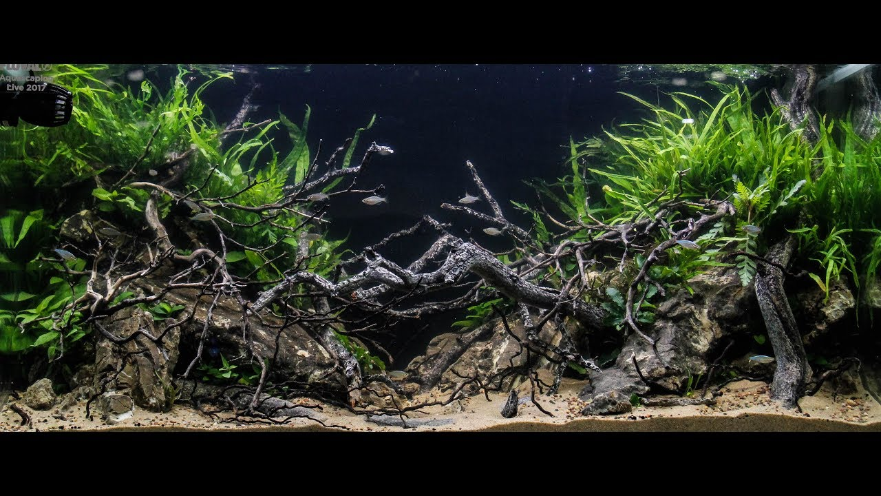 2017 Aquatic Experience Aquascaping Competition - YouTube