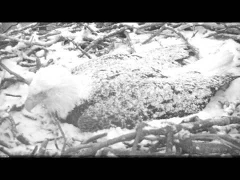 EAGLE CAM 2017- Winter Storm Stella Part 1 - ECC MPDC - Washington, DC - #EggWatch2017