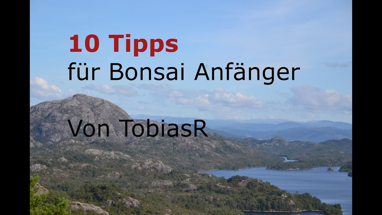 10 bonsai tipps f r anf nger deutsch hd youtube. Black Bedroom Furniture Sets. Home Design Ideas