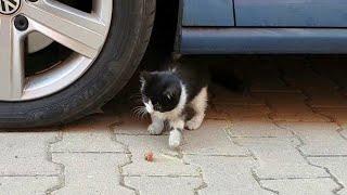 Yavru Kedi Bulduk Kedinin Karnını Doyurduk İsmini Şapşik Koyduk