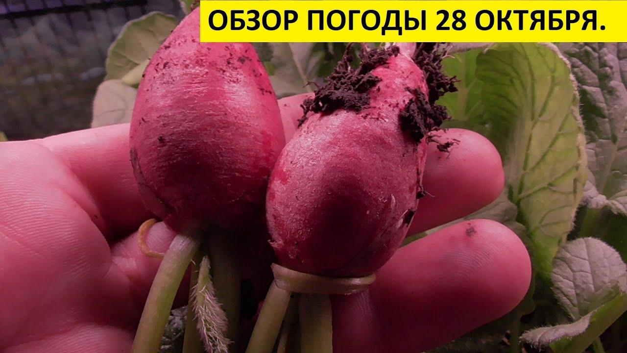 У НАС ХОЛОДНО! А ОГОРОД НА ОКНЕ ДАЕТ УРОЖАЙ! Ольга Чернова.