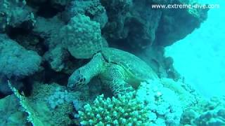 Turtle and paradise Marsa Alam 2018