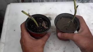 Clay Soil VS Compost | Garden Soil vs Compost (Urdu/Hindi)