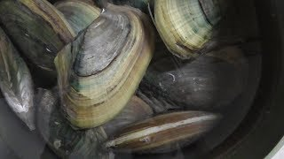 Vietnam street food - Cooking 200oz Clam (Freshwater Clam) for 4 People Family Dinner in Vietnam thumbnail