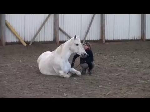 Для всадника и лошади New-Best-Horse