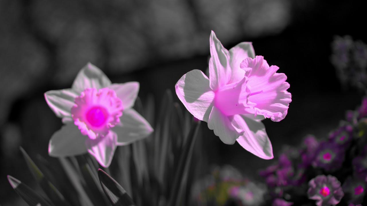 Красота по-деревенски. Flowers and relaxation