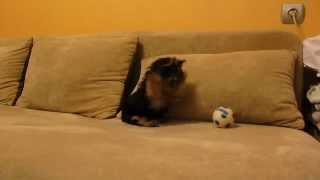 Funniest Yorkshire Terrier Puppy Barking At Toy Ball