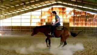 cavallo quarter horses reining