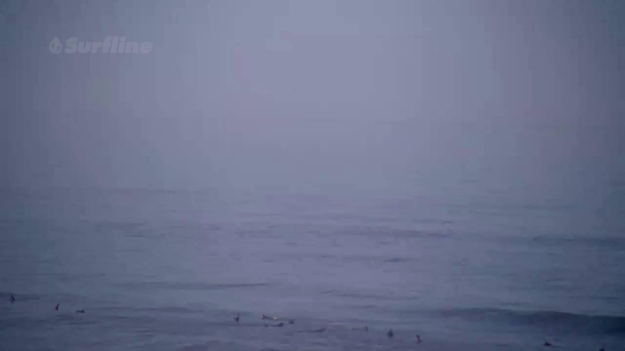 Great White Shark breaches at Ocean Beach