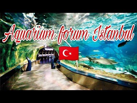 Istanbul aquarium forum - CINEMATIC VIDEO || إسطنبول أكواريوم فورم