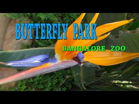 BUTTERFLY PARK-BANGALORE- ZOO-COLORFUL INSECTS-WINGED JEWELS