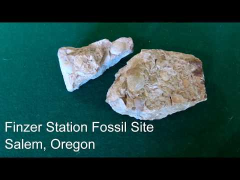 Finzer Station Fossil Site, Salem, Oregon