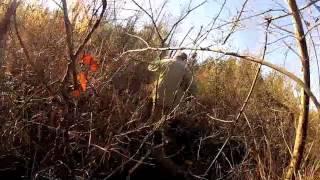 Arkansas hog hunt - Dakota Nelson